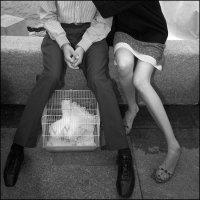 Любовь и голуби :: Василий Чекорин