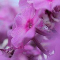 Цветы) :: Виталина Дорофеева