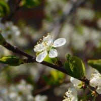 Весна :: Арина Саенко