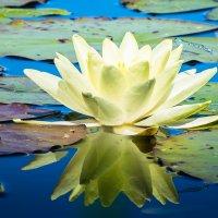 Стрекоза и цветок :: РАМ Стрельцов