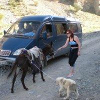 Дорога в горы Копетдаг. Неожиданное препятствие :: Elena Соломенцева