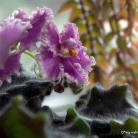 цветочные истории-цветы на подоконнике :: Олег Лукьянов