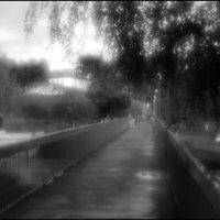 Умытые дождиком :: galina bronnikova