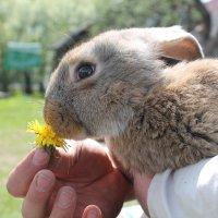 Кролик-эстет :: Анастасия Яковлева