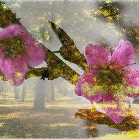 Весна и осень. :: ALLA Melnik