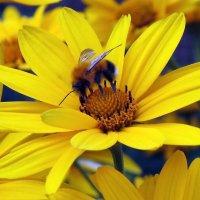Лето . Работа пчёлки. :: Мила Бовкун