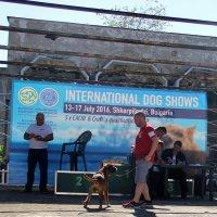 собачья выставка :: Ольга