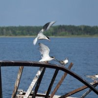 Разрешение на посадку :: Александр (Алчи) Шерстнёв
