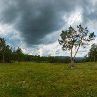 В лесу. :: Виктор Гришенков