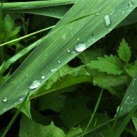 Дождь покапал и прошел... :: Владимир Секерко