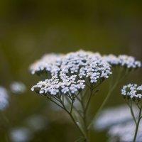 цветок :: Alexandr