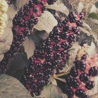Неизвестные цветы :: Valeriya Voice
