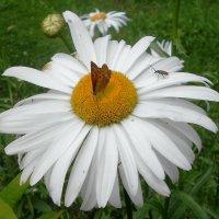 Цветы :: Андрей Осипов