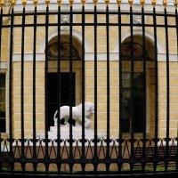 золотая клетка :: sv.kaschuk