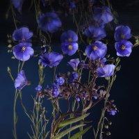 Голубые цветы :: Наталья Киоссе