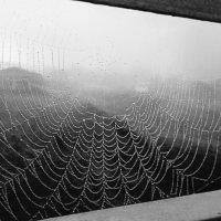утро туманное.. :: наталья