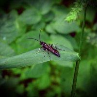 насекомое :: Юлия Денискина