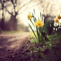 flowers :: Nadezhda