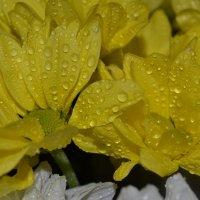 Жёлтая нежность. :: zoja