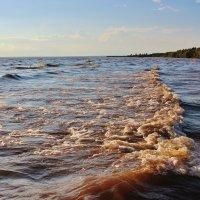 Шторм на озере. :: Галина .