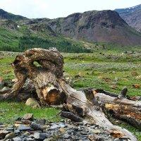 Заколдованная красавица. Южный Алтай. Долина реки Джело :: Natalya Danilova