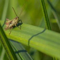 В траве сидел ... :: Александр Орлов