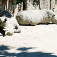 Еще носороги. :: Ольга Васильева