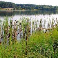 Берега уставшим пахнут летом... :: Лесо-Вед (Баранов)