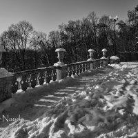 Зимний парк :: Игорь Найда