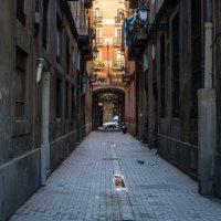 Улочки Барселоны :: Константин Шабалин