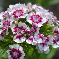 цветы :: Марина Титкова