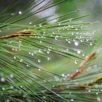 После дождя :: Елена Фомина