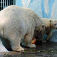 """Серия """" Белые медведи """". Обед . :: Мила Бовкун"""