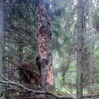 Санитарная очистка леса проведена успешно... :: Viktor