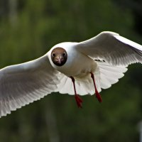 Чайка :: lapin_valerei@mail.ru