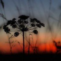 На закате :: Евгения Виноградова