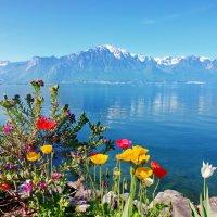 горы и цветы :: Elena Wymann