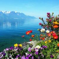 весны прозрачный воздух :: Elena Wymann