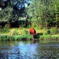 Сельский пейзаж у речки :: Анатолий