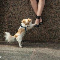 Мадам, я у ваших ног! :: andrius A