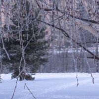 Немного зимы... :: Владимир Безбородов
