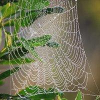 Кружевной подарок от паука :: Ирина Приходько