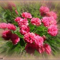Розовое лето :: Нина Бутко