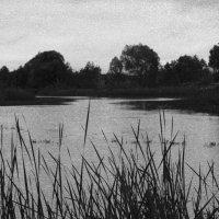 Черно-белый пейзаж :: Yulia Deimos