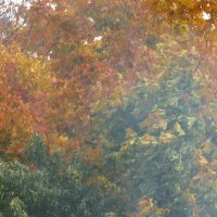 Осень в дымке костров :: Yulia Deimos