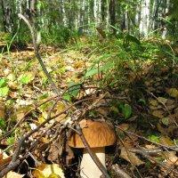 Находка (В наших лесах. Леса Липецкой области) :: Yulia Deimos