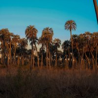 El Palmar National Park :: Nataly ***