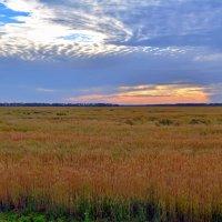 Поля пшеничные... поля бескрайние... :: *MIRA* **