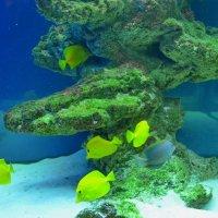 В аквариуме :: Ростислав