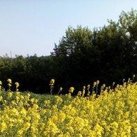 Солнечный свет в поле (фотография сделана моим отцом) :: Николай Филоненко